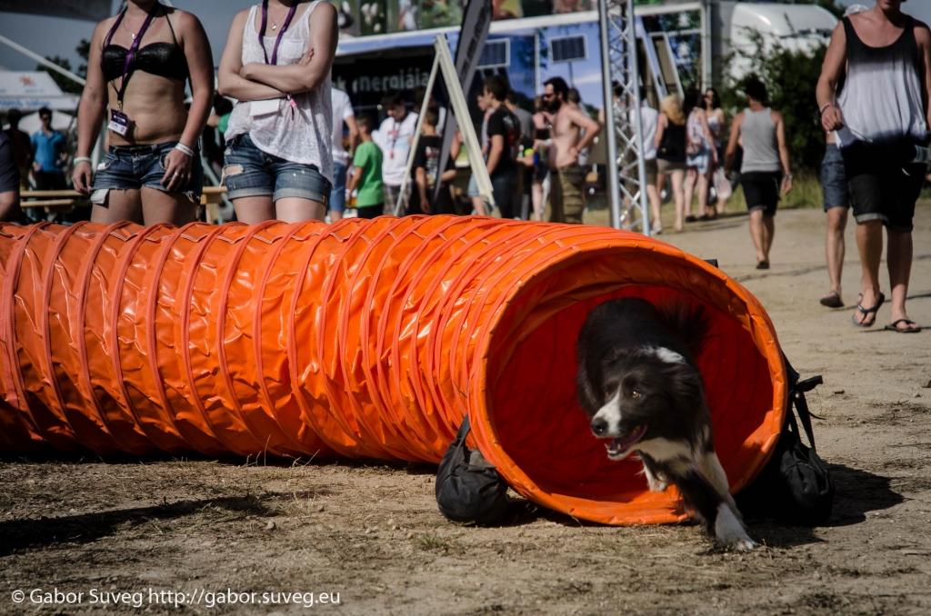 VOLT 2014 / agility bemutato / 1 © Gabor Suveg