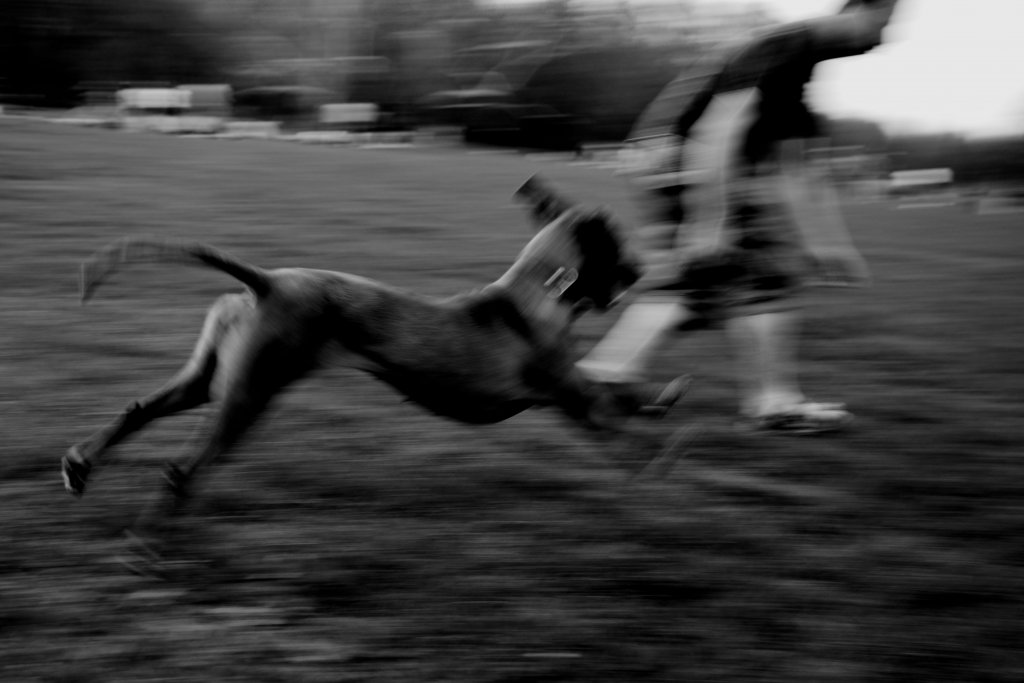 114  / 2013 - run  © Gabor Suveg