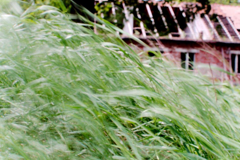 131  / 2013 - windy sunny day © Gabor Suveg