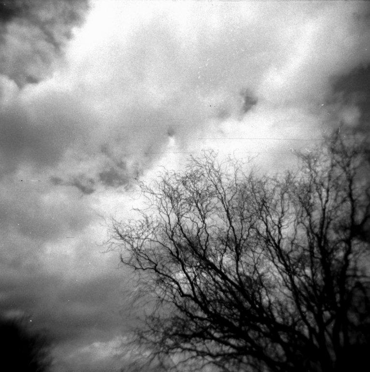 133  / 2013 - surrender © Gabor Suveg