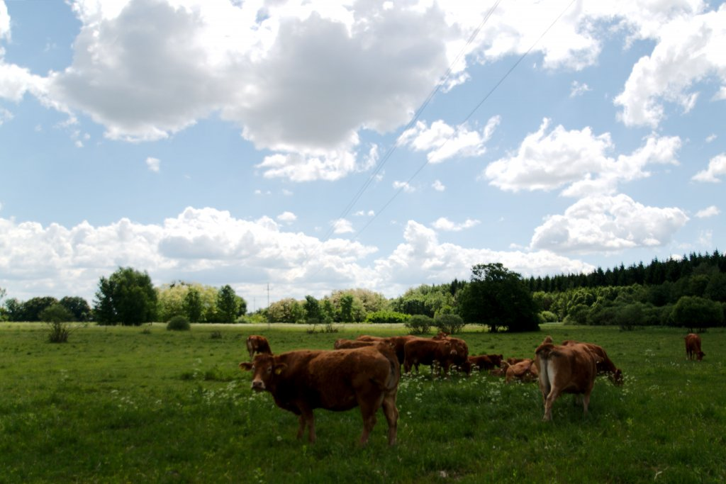 148 / 2013 - countryside rest © Gabor Suveg