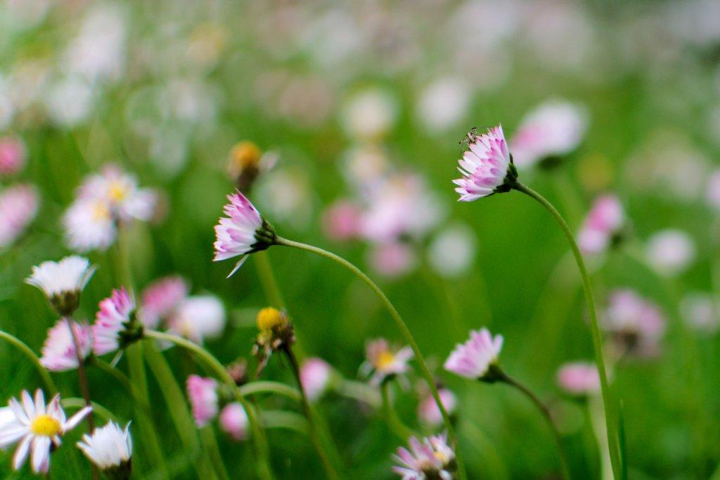 155 / 2013 - secret garden © Gabor Suveg