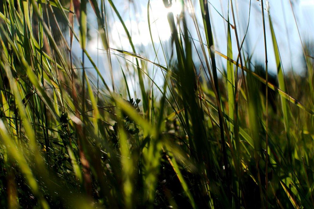 182 / 2013 - intense greens © Gabor Suveg