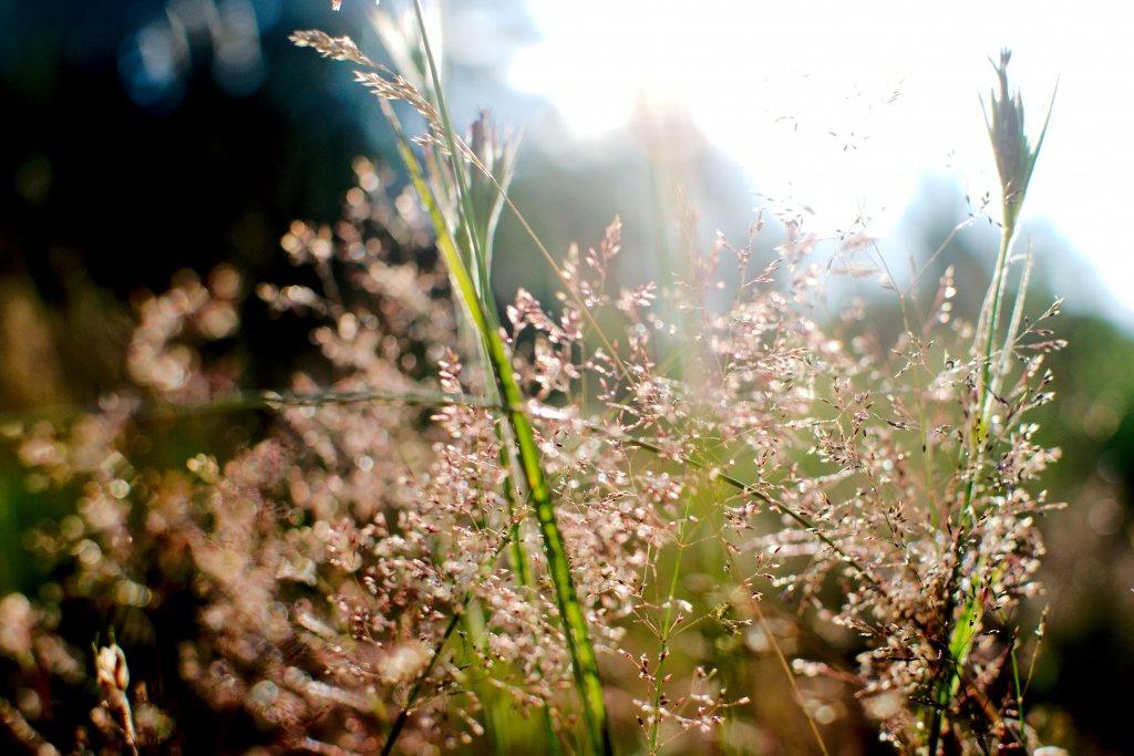 183 / 2013 - natural clarity © Gabor Suveg