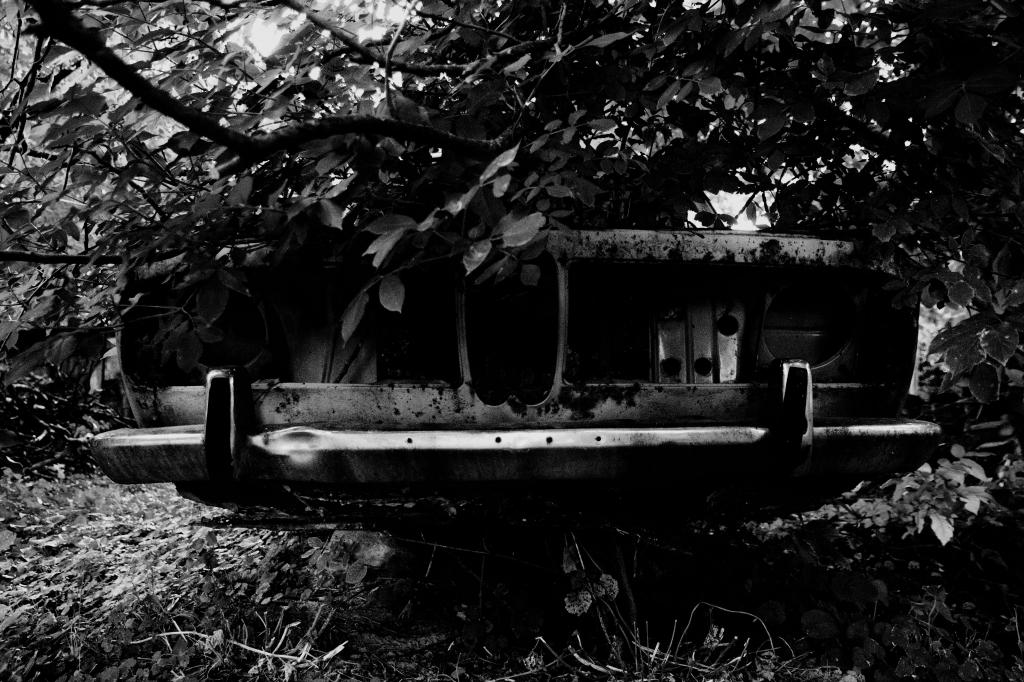 241 / 2013 – lost in backyard © Gabor Suveg