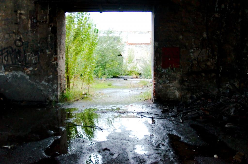 265 / 2013 – run outside © Gabor Suveg
