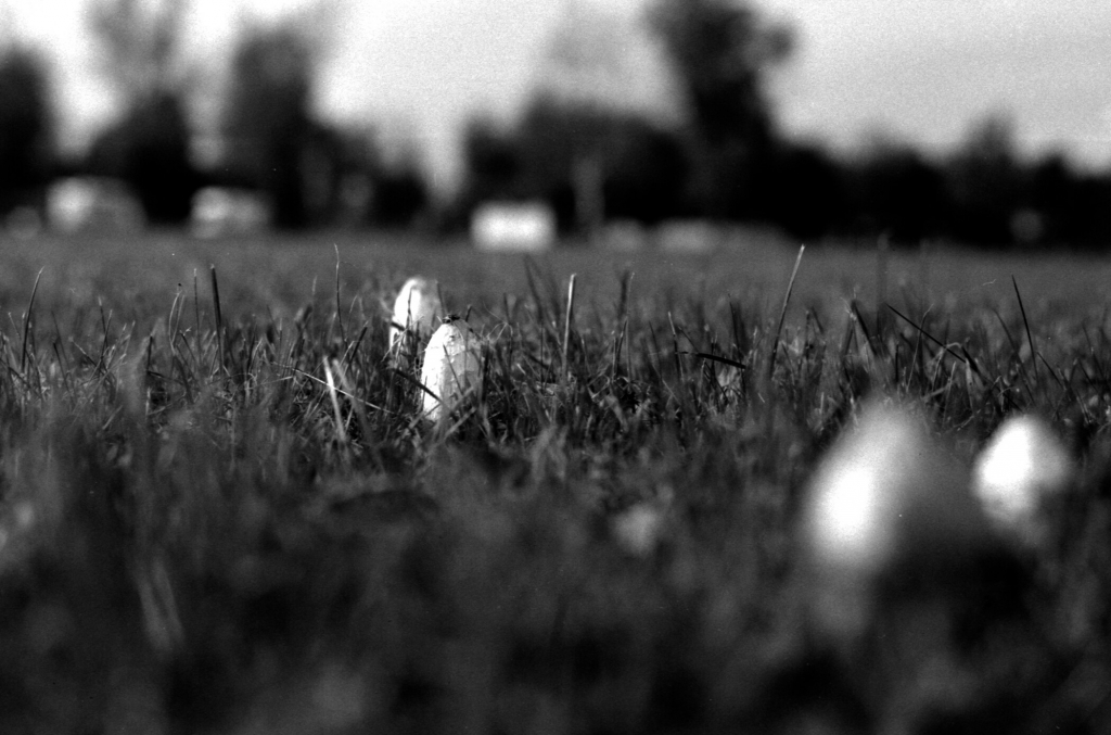 282 / 2013 – touch the ground © Gabor Suveg