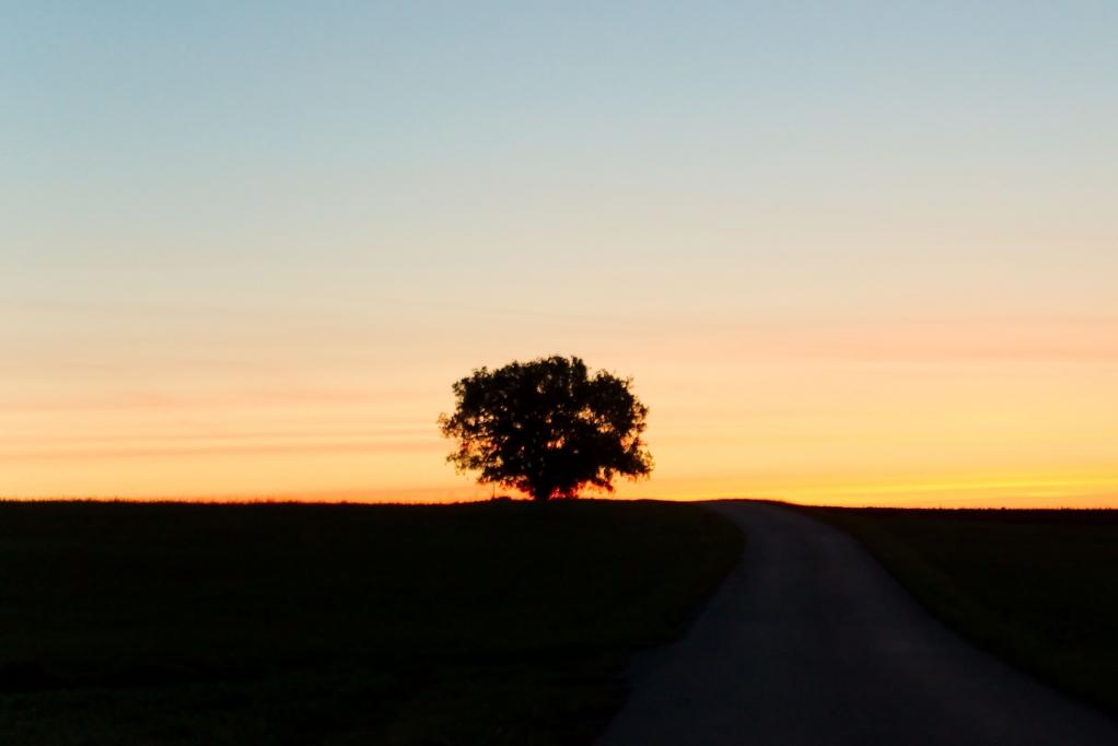 283 / 2013 – the morning sun © Gabor Suveg