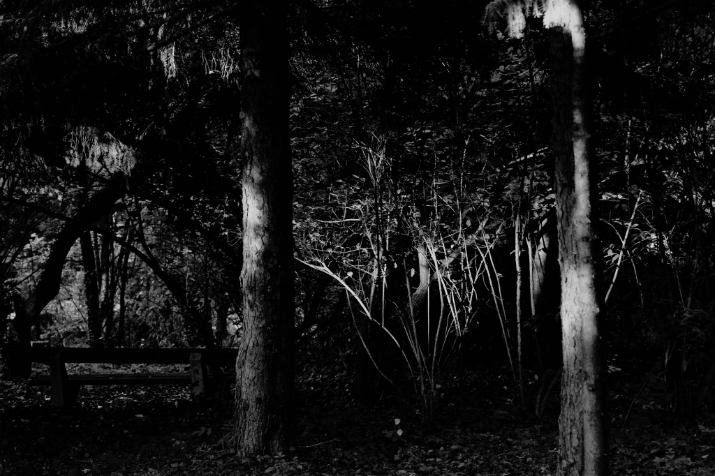 286 / 2013 –  trees covering © Gabor Suveg