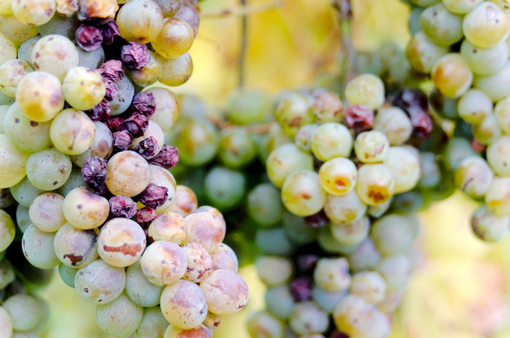 294 / 2013 –  fermentation © Gabor Suveg