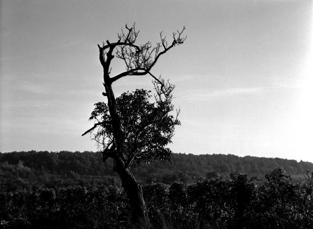 296 / 2013 – longing for good © Gabor Suveg