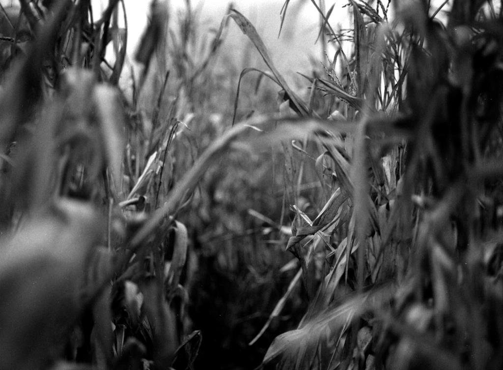 297 / 2013 – lost in trouble © Gabor Suveg