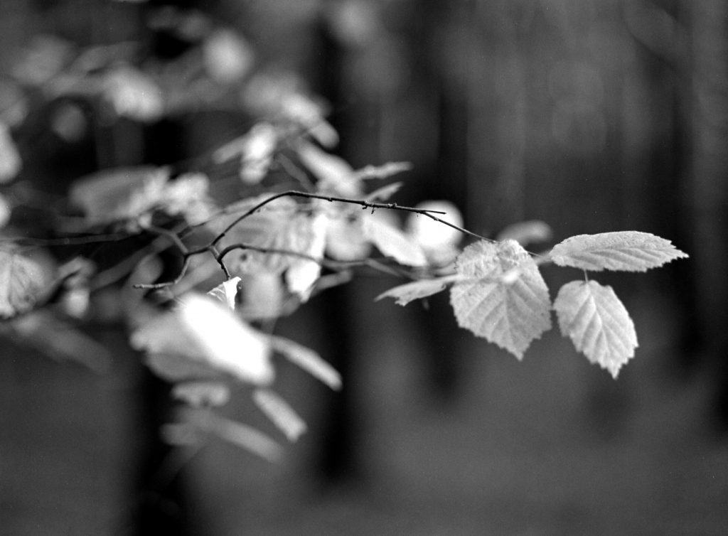 305 / 2013 – last leaves © Gabor Suveg