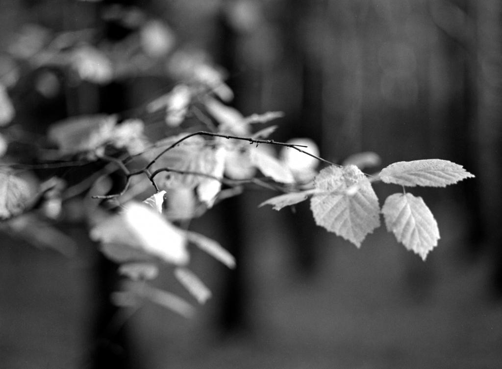 305 / 2013 – last letters © Gabor Suveg
