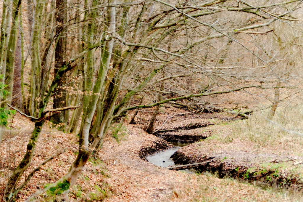 339 / 2013 – walking on the wild side © Gabor Suveg