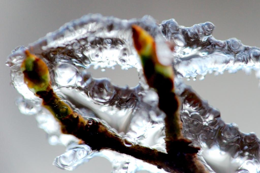 348 / 2013 – frozen world © Gabor Suveg