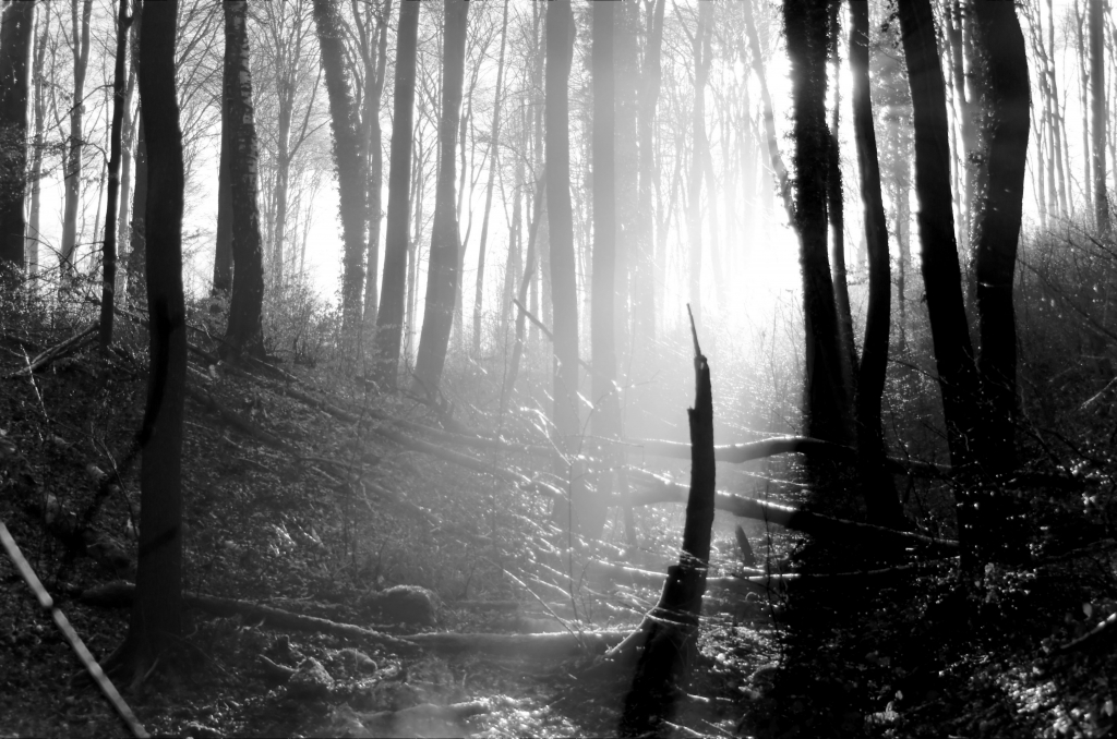 354 / 2013 – sunshine after the rain © Gabor Suveg