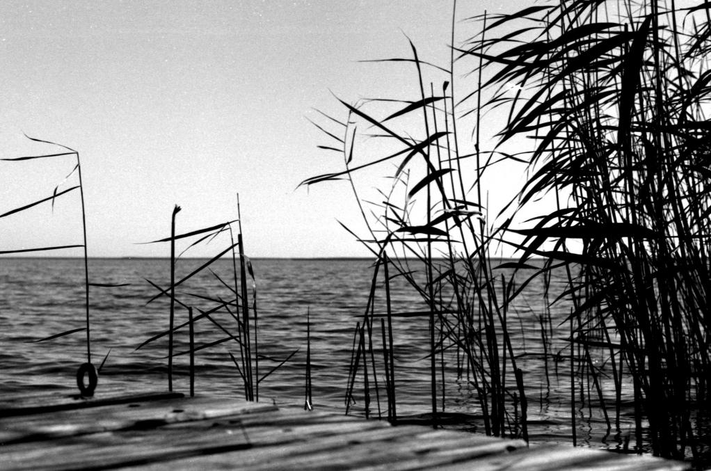 356 / 2013 – leaving things unsaid © Gabor Suveg