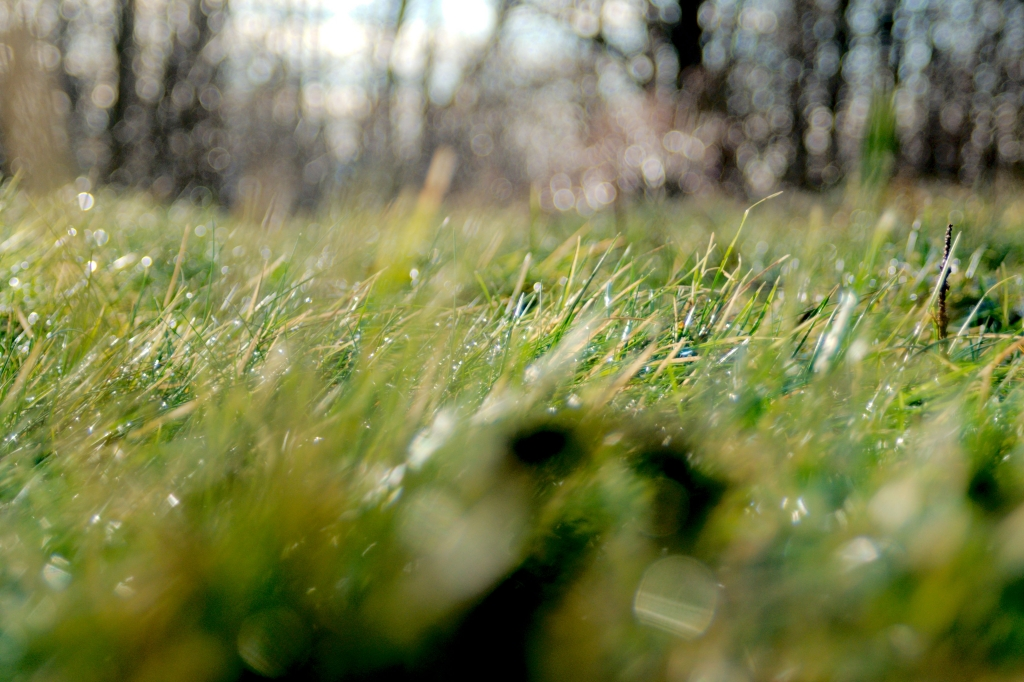 363 / 2013 – lying on grass © Gabor Suveg