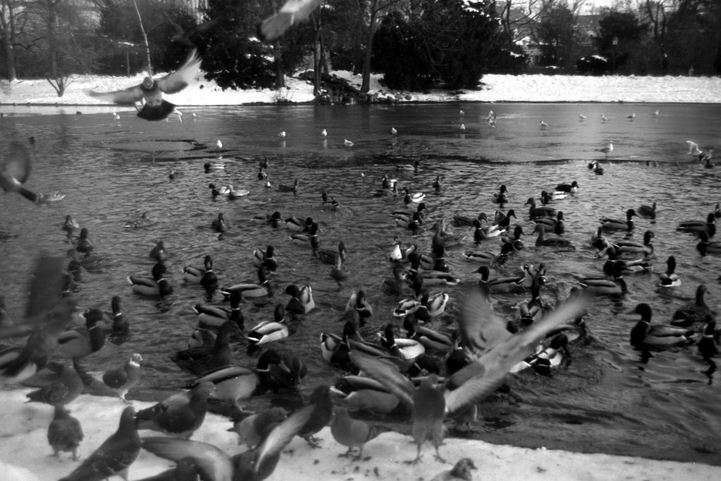 38 / 2013 - birds © Gabor Suveg