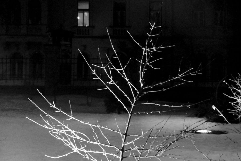 57 / 2013  -  lighting tree © Gabor Suveg