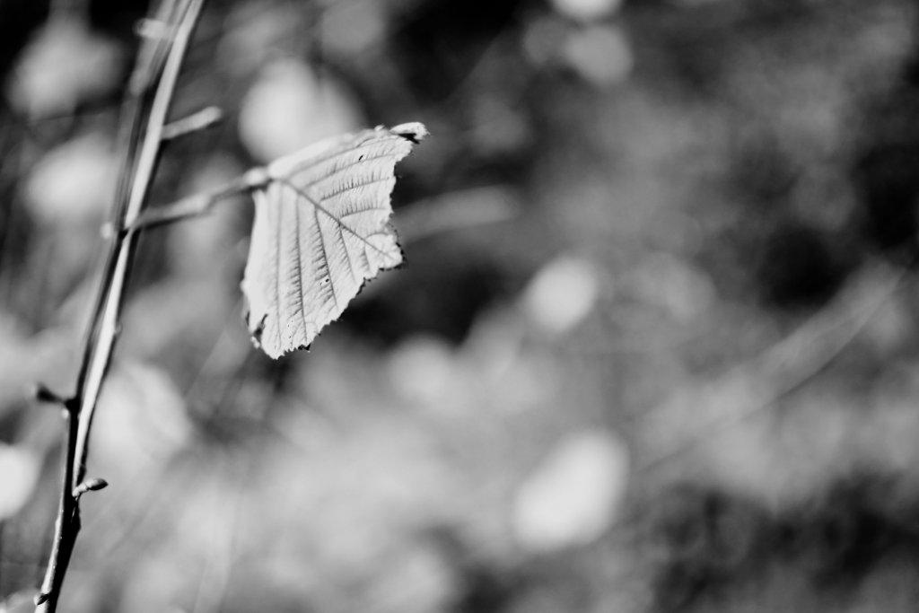 59 / 2013  -  alone © Gabor Suveg