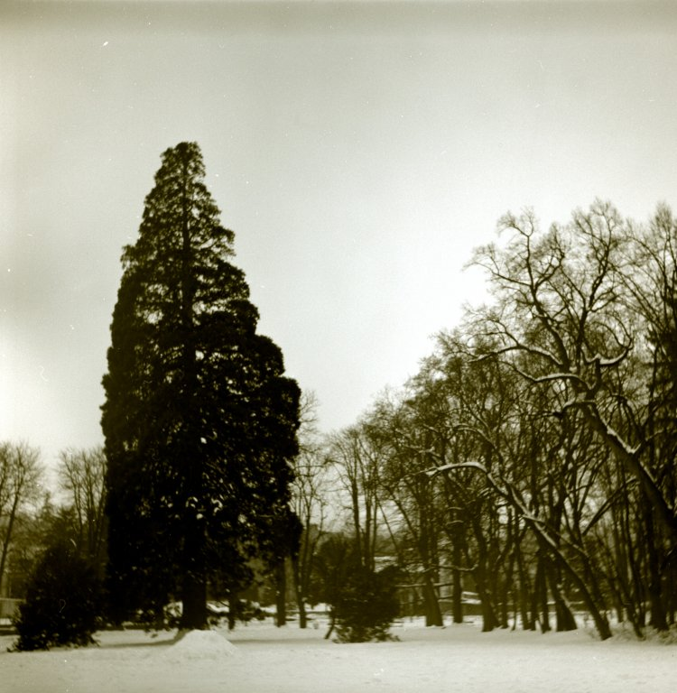 60 / 2013  -  in the park © Gabor Suveg