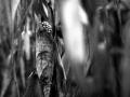 293 / 2013 –  waiting for tomorrow © Gabor Suveg