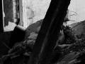 308 / 2013 –   collapsing slowly © Gabor Suveg