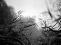 359 / 2013 – soft touches © Gabor Suveg
