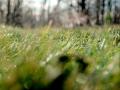 363 / 2013 – lying on grass © Gabor Suveg