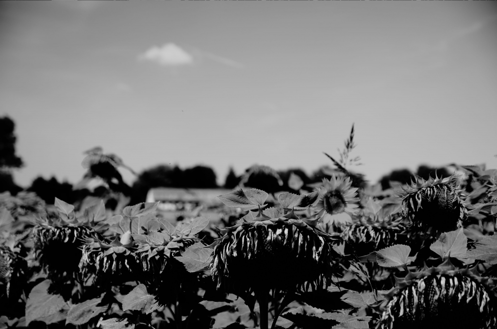 242 / 2013 – summer ends up here © Gabor Suveg
