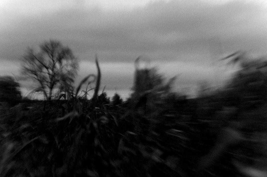 316 / 2013 – runaway © Gabor Suveg