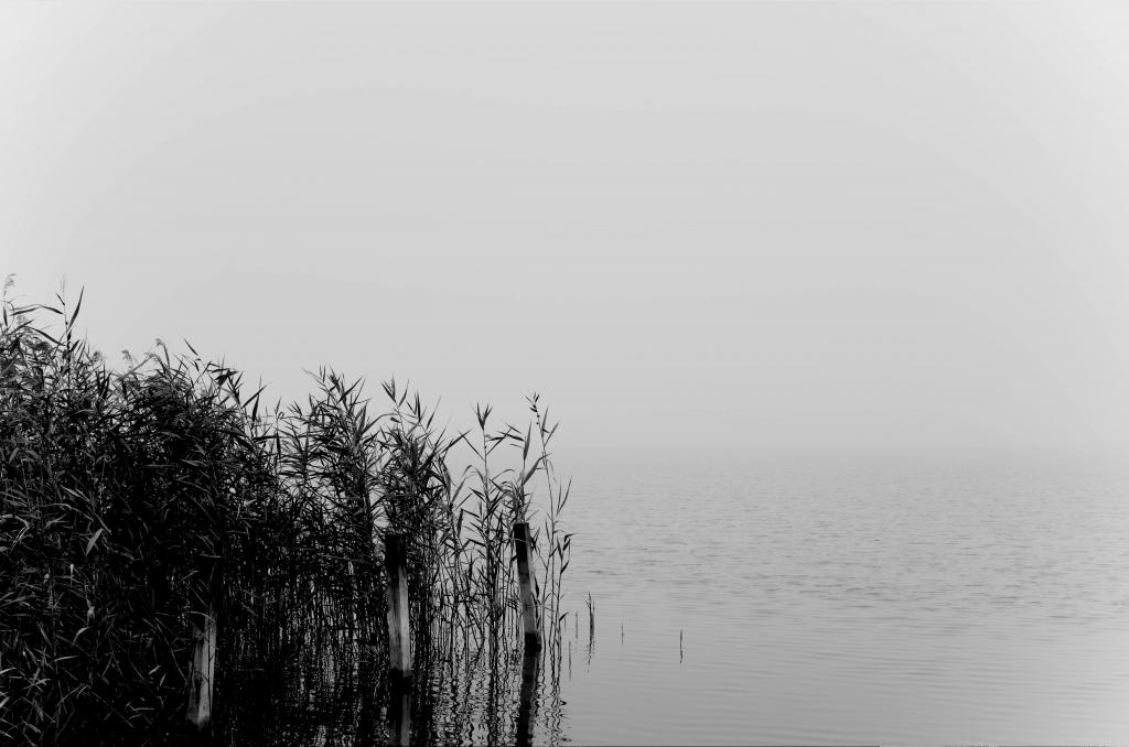 322 / 2013 – gone in november © Gabor Suveg