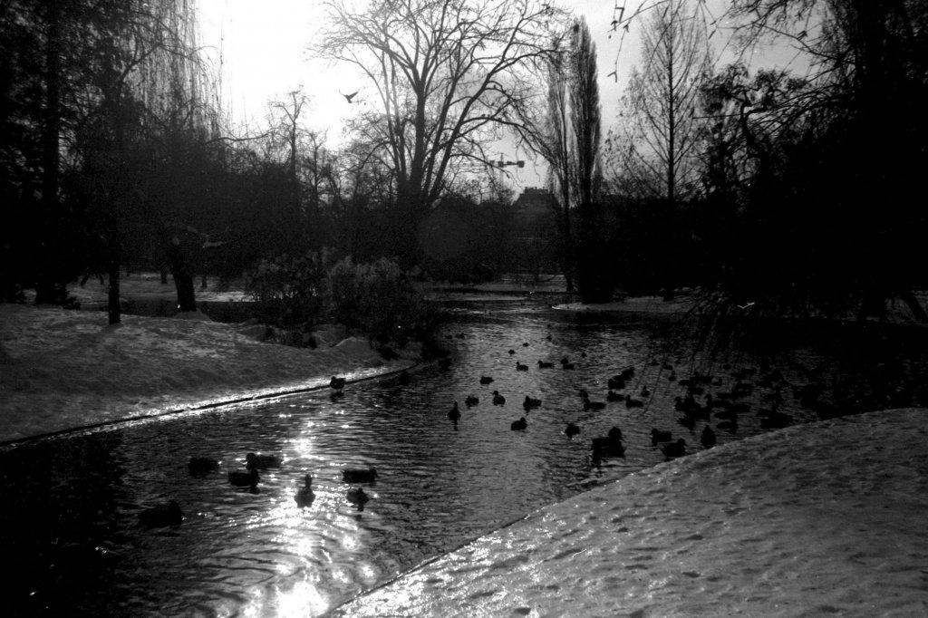33 / 2013 - vienna, stadtpark © Gabor Suveg