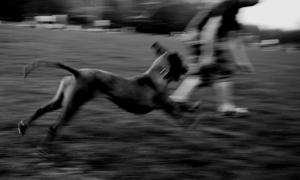 114  / 2013 - run  © Gabor Suveg