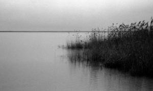 16 / 2013 - rainy neusiedler see