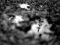 gabor-suveg-photos-365-325