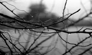 35 / 2013 - tomorrow rain © Gabor Suveg