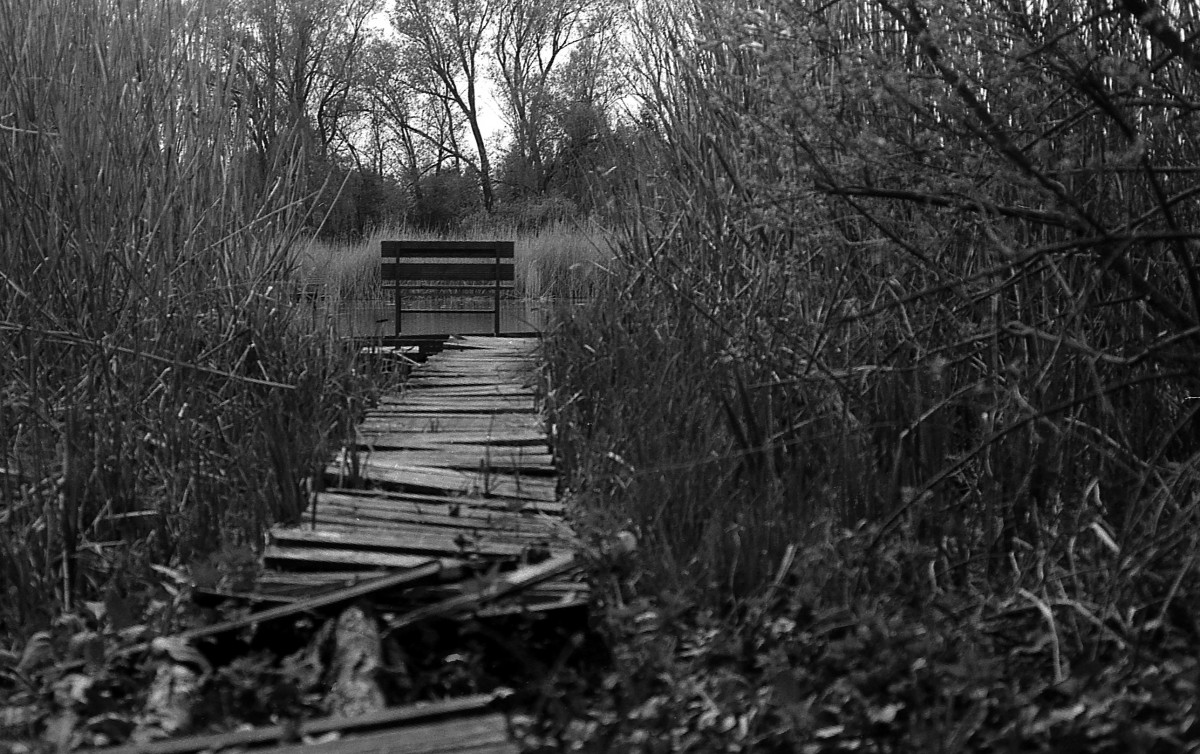 silent lake © Gabor Suveg